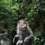 10 Tipps für Bali