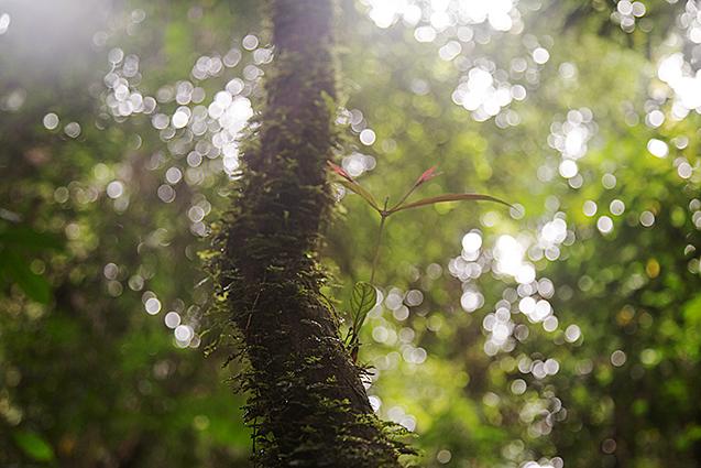 Borneo10_blog