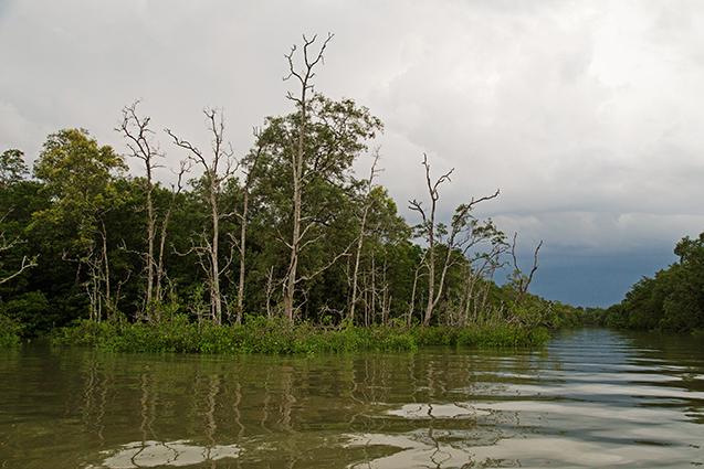 Borneo15_blog