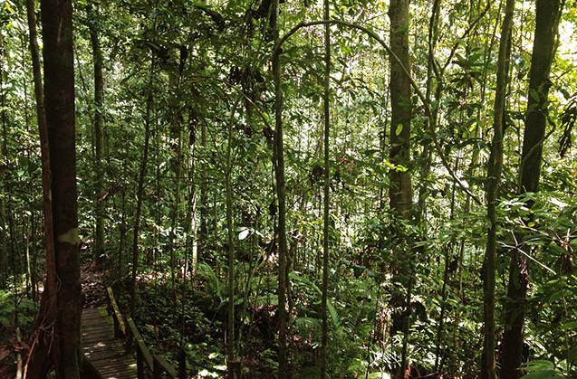 Borneo4_blog