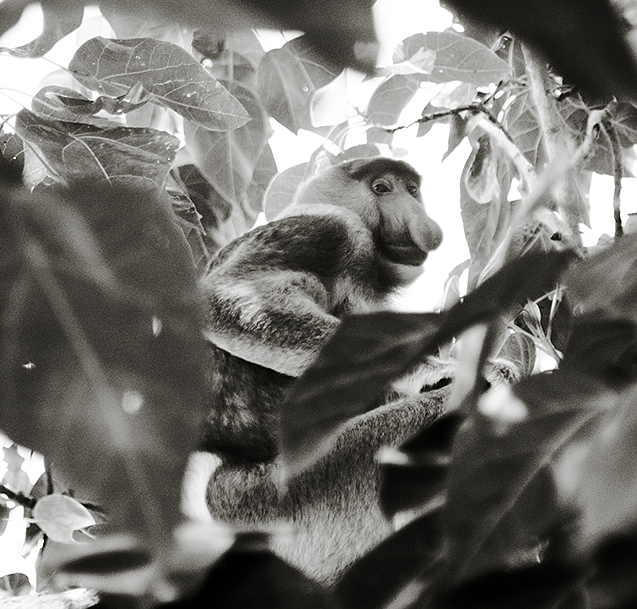 Borneo8a_blog