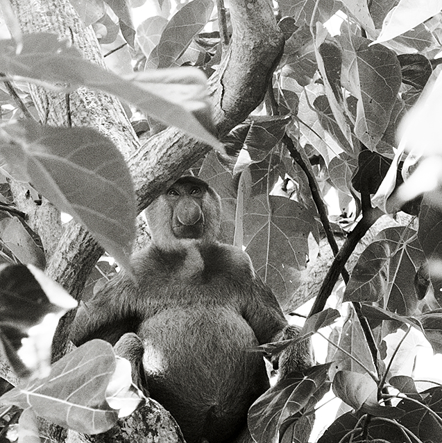 Borneo8b_blog