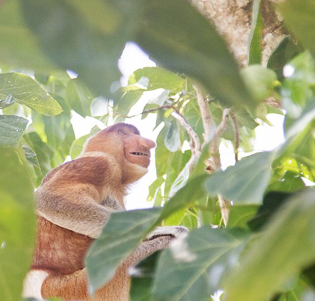 Borneo8c_blog