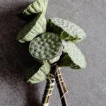 Freitags-Früchtchen: Lotusfrucht